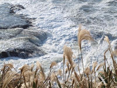ススキと波と・・