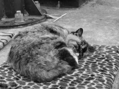 江ノ島の眠り猫1