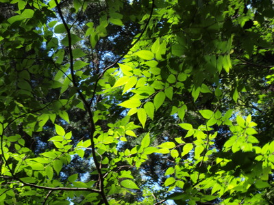 緑と光と・・2