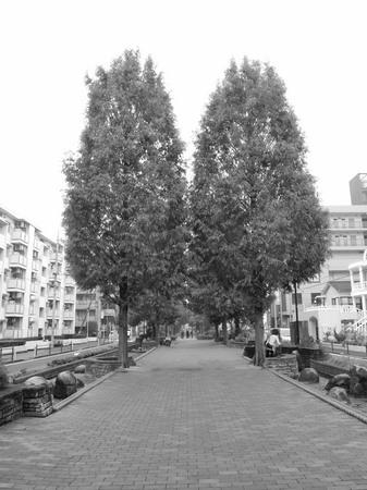 街路樹〜モノクロ