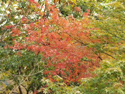 紅葉〜♪2