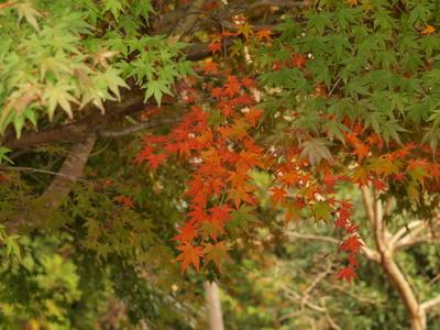 紅葉〜♪3
