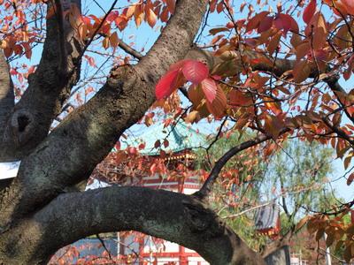 不忍池の紅葉2