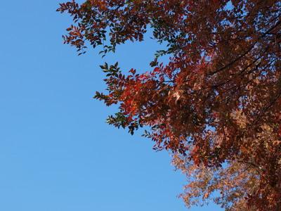 不忍池の紅葉3