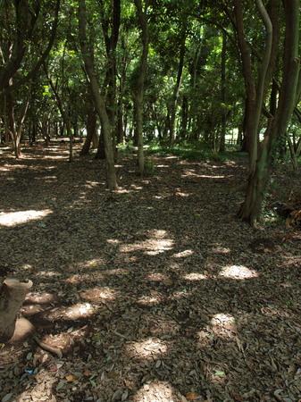 木漏れ日3