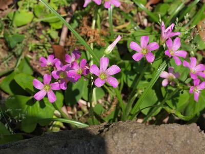 道端に咲いていた花1