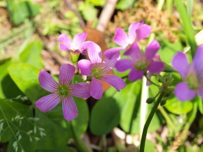 道端に咲いていた花2