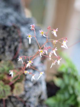手水舎に咲いていたちっちゃい花♪